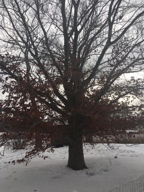Blog_Naked Tree