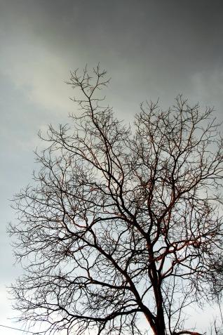 blog_winter